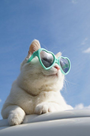 Cool Cat, Cat Celebrity, Heart Glasses, Kitty Kitty, Crazy Cat ...