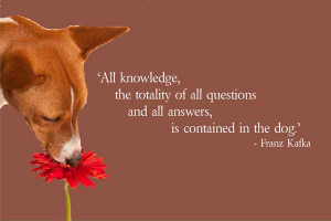 Popular Dog Quotes and Sayings