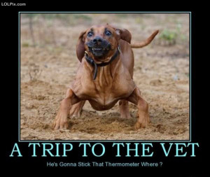 ... Page 13/16 from Funny Pictures 749 (Trip To The Vet) Posted 3/5/2010