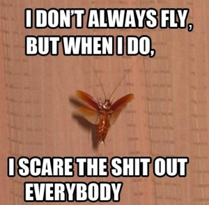 10 Ways to Survive a Flying Cockroach Flying Ipis Attack WhenInManila ...
