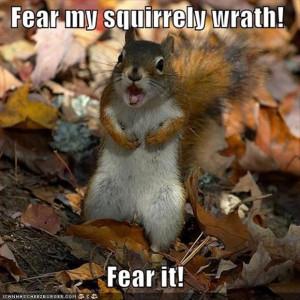 funny squirrels