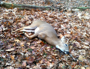 ... deer hunting quotes for girls deer hunting sayings country girl quotes