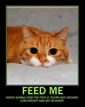 cat-inspirational-poster_10