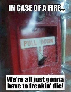 Funny Spider Sayings