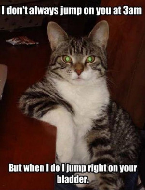9f32Funny Animals 37 Attack of the funny animals (20 Photos)
