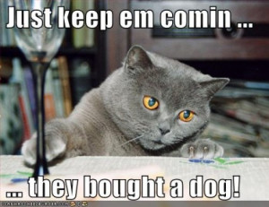 funny-pictures-cat-drinks-because-you-bought-a-dog