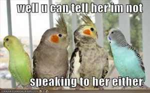 funny birds pictures wallpapers