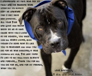 Quotes About Shelter Dogs http://shelter-tails.blogspot.com/2011_01_01 ...