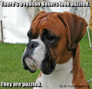 Funny Humorous Puzzled Boxers