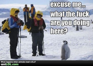 Funny Vote For Me Quotes Excuse me? funny animal