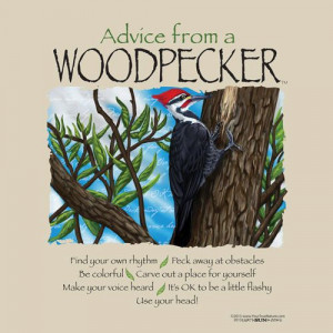 advice from a woodpecker...