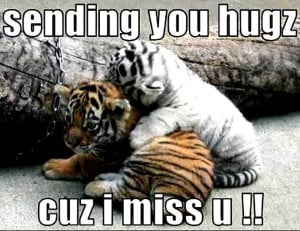 Top 12 Funny Tiger Pictures & Tiger Facts