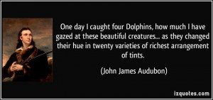One day I caught four Dolphins, how much I have gazed at these ...