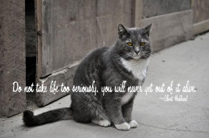 Pretty Kitty Quote Print by JAMART Photography