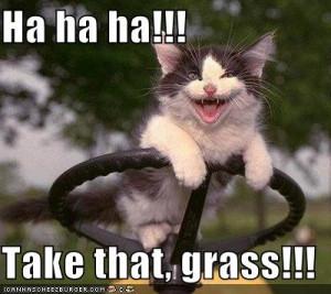 lawn mowing kitteh.jpg