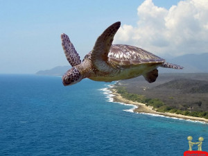 Turtle Flying In The Air Funny Wallpaper