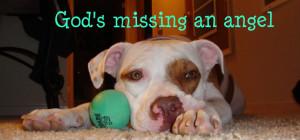 Cute Funny Dog Puppy Graphics Code Pitbull Pit Bull Love