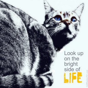 bright side of life-look up-quote cat-art-cat wisdom 101