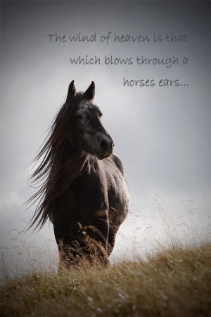 Horse quote, inspirational quotation, horse photography with quote ...