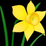 Flower Clip Art Best Blog Ecro