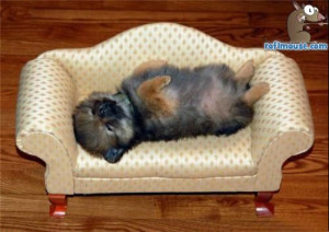 Funny Puppy Sleeping images