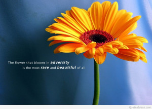 Awesome inspirational quote with flower wallpaper