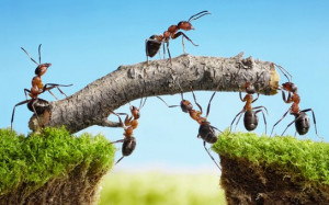 Teamwork Photo via Shutterstock