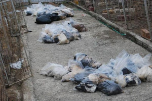 Romania's homeless animals... no-one ever wanted them. Except PROTAN!