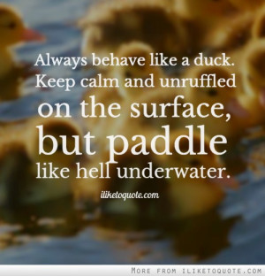 ... calm and unruffled on the surface, but paddle like hell underwater
