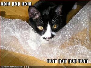 funny-pictures-cat-bites-bubble-wrap