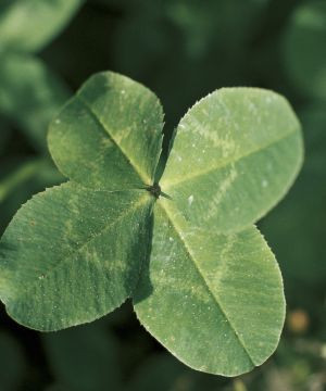 Thank My Lucky Stars: Famous People's Quotes on Luck