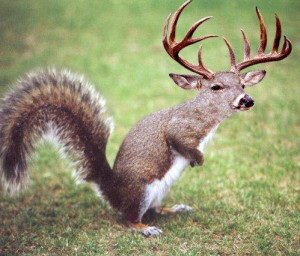 Funny Squirrel Wear Deer Dress