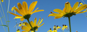 Land Stewardship The...