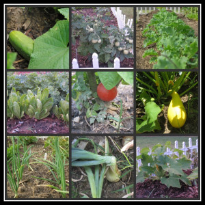 Vegetable Garden Quotes Pic #18