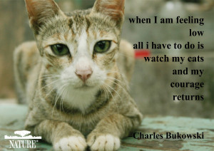 Download and share these pet postcards featuring famous quotes from ...