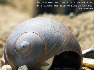 Graphy Sea Shell Quote