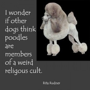 dog quotes about poodles