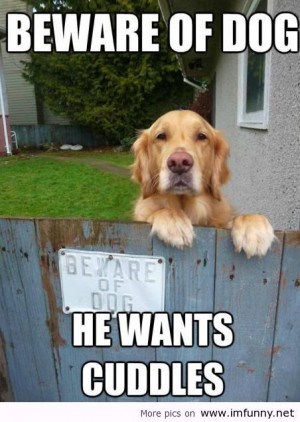 Behare dogs, he wants cuddles / Funny Pictures, Funny Quotes – Ph...