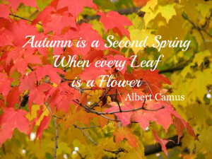 Autumn Quote Quotes Scenery