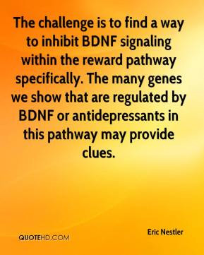 challenge is to find a way to inhibit BDNF signaling within the reward ...