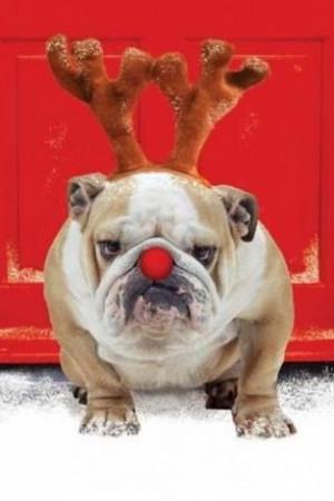 Funny Christmas Animals App