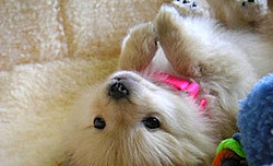 Beautiful Quotes About Dogs