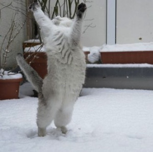 16-cats-playing-in-the-snow-photos-1.jpeg