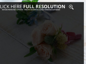 Flowers Photography and Wallpapers