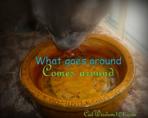 Quote-what-goes-around-comes-around-cat-bowl-far-ridge-ceramics.jpg