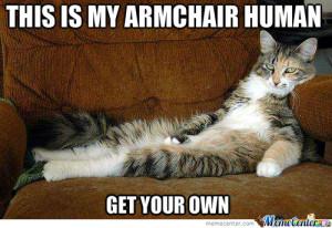 Mean Cat
