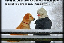 Quotes / by Life Marley And Me
