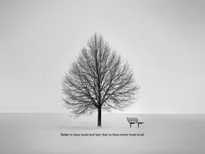 ... quotes,words,mottos,aphorism,maxim,bench,tree,grey,lonely,love,winter