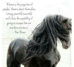 Beautiful horse and beautiful quote!!