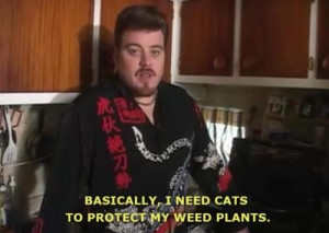 animals trailer park boys cats weed funny